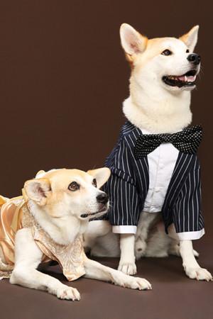 江戸川区 犬ちゃん 愛犬と ご家族写真